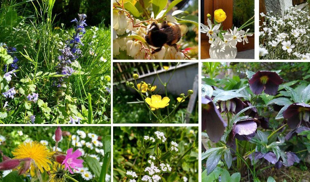 Garten Momentaufnahme